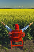 a man with arms outstretched sits in a red chair in front of a bloom stage canola field,  Tiger Hills, Manitoba, Canada