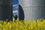 a man looks out over a field of bloom stage canola with grain bins(silos) in the background,  Tiger Hills, Manitoba, Canada