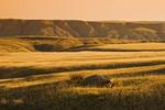 South Saskatchewan River Valley near Sandy Point Park, north of Medicine Hat, Alberta, Canada.