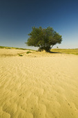 the Great Sandhills, near Sceptre, Saskatchewan, Canada
