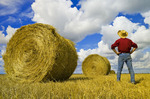 a man looks out over grain straw rolls and sky with  cumulus clouds, near Carey, Manitoba ,Canada