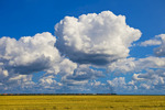 a train carrying rail hopper cars passes an oat stubble field with a sky filled with cumulus clouds  developing into cumulonimbus form , near Carey, Manitoba ,Canada