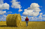 a man walks out over a grain stubble field with straw bales and sky with  cumulus clouds, near Carey, Manitoba ,Canada
