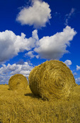 grain straw rolls and stubble field with a sky filled with cumulus clouds  developing into cumulonimbus form , near Carey, Manitoba ,Canada
