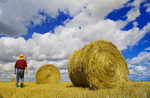 a man looks out over grain straw rolls and sky with  cumulus clouds developing into cumulonimbus clouds, near Carey, Manitoba ,Canada