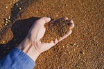 a hand holds flax seed that has been loaded into a farm truck during the harvest, near Lorette, Manitoba, Canada