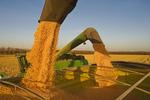 two combines auger grain corn into a grain wagon during the harvest, near La Salle, Manitoba, Canada