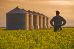 a farmer looks out over his bloom stage canola with grain bins(silos) in the background,  near Cypress River, Manitoba, Canada