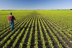 a farmer scouts his early growth soybean field near Lorette, Manitoba, Canada