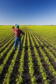 a farmer in his early growth soybean field near Lorette, Manitoba, Canada