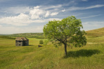 abandoned farm house in the Qu'Appelle Valley, Saskatchewan, Canada