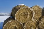 frost on hay rolls, near Oakbank, Manitoba