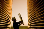 a farmer looks at wheat samples from between his grain storage bins at sunset,near Dugald, Manitoba, Canada