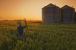 a farmer looks at wheat samples/ grain storage bins in the background, near Dugald, Manitoba, Canada