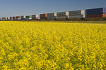 moving rail cars carrying containers pass a canola field, near Winnipeg, Manitoba, Canada