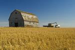 a combine augers durum wheat into a farm truck next to an old barn near Ponteix, Saskatchewan, Canada