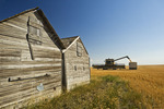 a combine augers durum wheat into a farm truck next to old grain bins near Ponteix, Saskatchewan, Canada