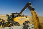 a combine empties durum wheat into a farm truck during the harvest, near Ponteix, Saskatchewan, Canada