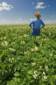 a farmer looks out over a mid-growth blooming potato field with a center pivot irrigation system on the horizon, near Somerset, Manitoba, Canada