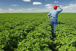a farmer looks out over a mid-growth potato field that stretches to the horizon, near Somerset, Manitoba, Canada