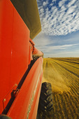a combine harvests oats, near Dugald, Manitoba, Canada