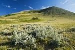 sage brush and hills, Cypress Hills, Saskatchewan, Canada