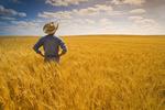 a man looks out over a mature, harvest ready durum wheat field, near Leader, Saskatchewan, Canada