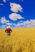 a man looks out over a mature, harvest ready durum wheat field, near Glidden, Saskatchewan, Canada