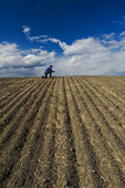 a man examines soil in a newly seeded field, Tiger Hills, Manitoba, Canada
