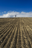 a man looks out over a a newly seeded field, Tiger Hills, Manitoba, Canada