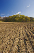 newly seeded field, Tiger Hills, Manitoba, Canada