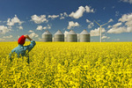 a man looks out over a field of bloom stage canola with grain bins(silos) and a wind turbine in the background,  Tiger Hills, Manitoba, Canada