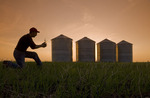 a farmer checks an early growth winter wheat crop growing in soil with canola residue, storage bins in the background, near Carey, Manitoba, Canada