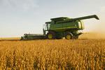 soybean harvest, near La Salle, Manitoba, Canada