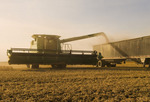 a combine empties soybeans into a farm truck during the harvest,near La Salle, Manitoba, Canada