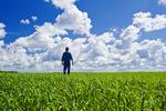 a farmer scouts an early growth oat field near Lorette, Manitoba, Canada