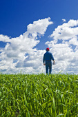 an out of focus farmer scouts an early growth oat field near Lorette, Manitoba, Canada