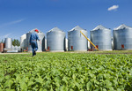 a man scouts early growth canola near grain storage bins, near Dugald, Manitoba, Canada