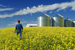 man scouts a field of bloom stage canola, grain bins(silos) in the background,  Tiger Hills, Manitoba, Canada