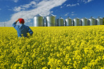 man in a field of bloom stage canola with grain bins(silos) in the background,  Tiger Hills, Manitoba, Canada