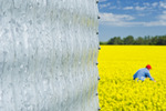 close-up of grain bin and man in a field of bloom stage canola in the background,  Tiger Hills, Manitoba, Canada