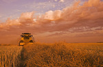 a combine harvester works in a canola field, near Dugald, Manitoba, Canada