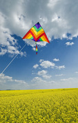 kite above bloom stage canola field , Tiger Hills,  Manitoba, Canada