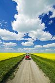 road through farmland with canola on both sides, Tiger Hills, Manitoba, Canada