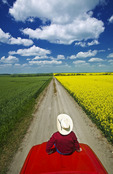 a man sits on the front of a pickup truck on a country road with farmland(wheat and canola) on either side of the road,  Tiger Hills, Manitoba, Canada