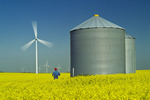 a bloom stage canola field with grain bins(silos) and wind turbines,  near St. Leon, Manitoba, Canada