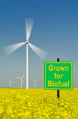 a biofuel sign in a bloom stage canola field with wind turbines in the background,  near St. Leon, Manitoba, Canada