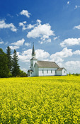 bloom stage canola field with historic Chapelle St. Thérèse church in the background, Cardinal, Manitoba, Canada