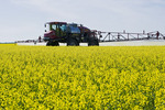 a high clearance sprayer applies fungicide on blooming canola to prevent sclerotinia, near Dugald, Manitoba, Canada