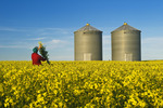 man in a field of bloom stage canola with grain bins(silos) in the background,  near Somerset, Manitoba, Canada